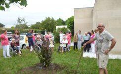 JUILLET 2019, L'arbre du souvenir à Pagneau